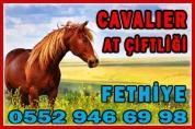 Fethiye Cavalier At Çiftliği – Horse Ranch & Horse Riding